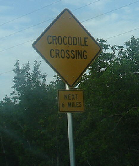 CrocCossing