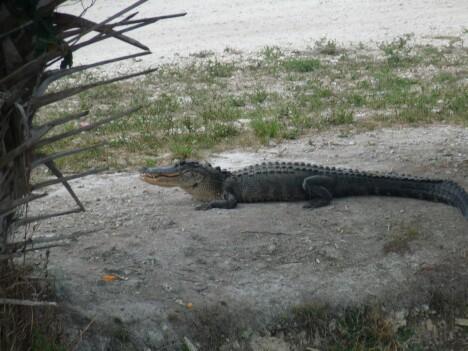 Gators 2
