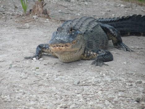 Gators 3
