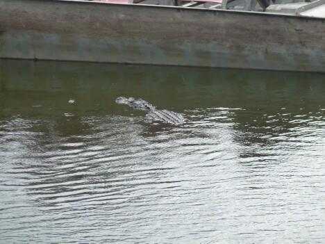 Gators 4