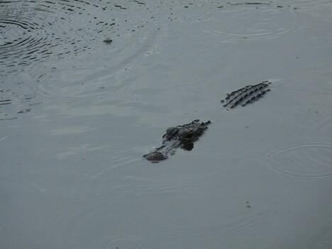 Gators 5