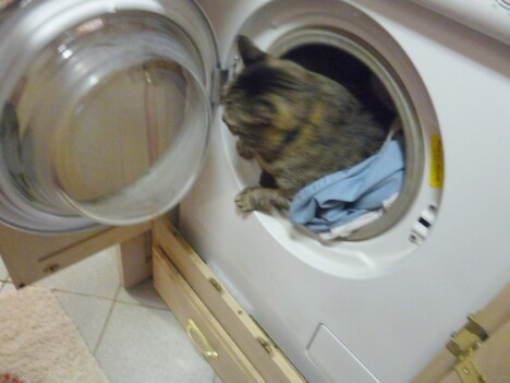 Mister in Washer