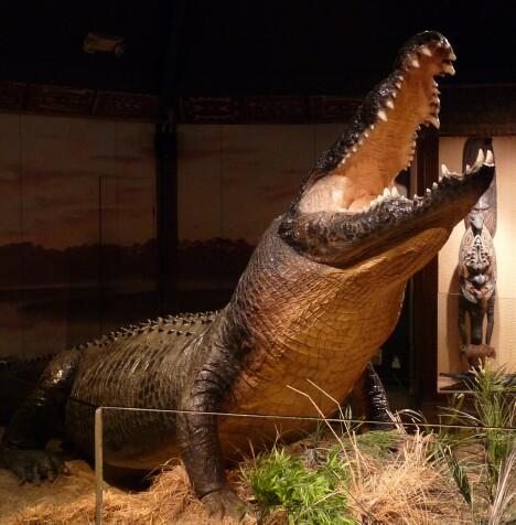 Gomek - Tha Saltwater Crocodile
