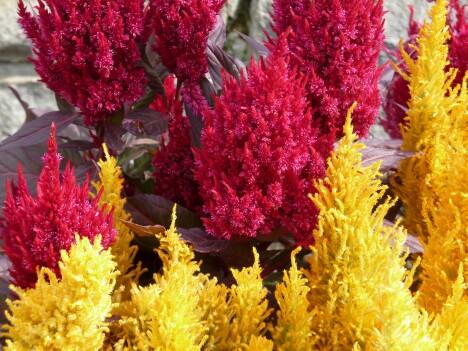 Niagara Flowers 2