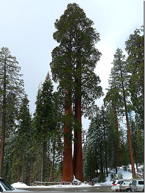 DoubleSequoias