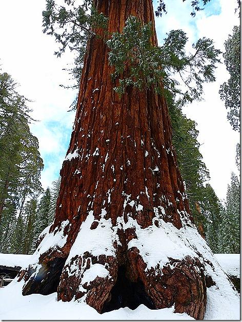 SequoiaBase