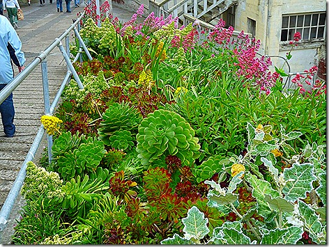 Alcatraz Flowers 2