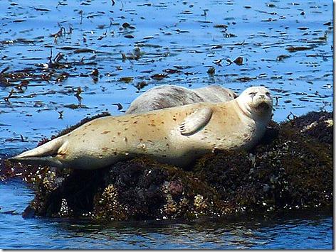 Monterey El Seal