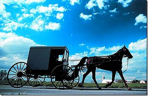 Amish Buggy 2