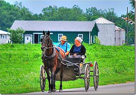 Amish Buggy 3