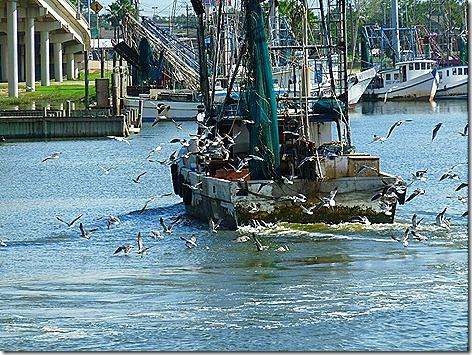 Kemah Shrimpboat