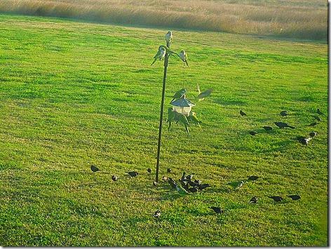 Site 80 Birds