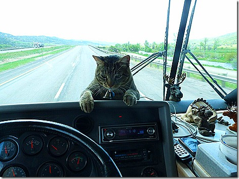 Mister on Dash