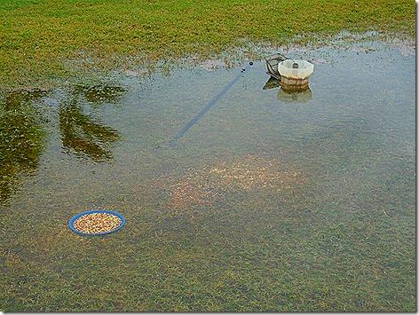 Waterlogged Feeder