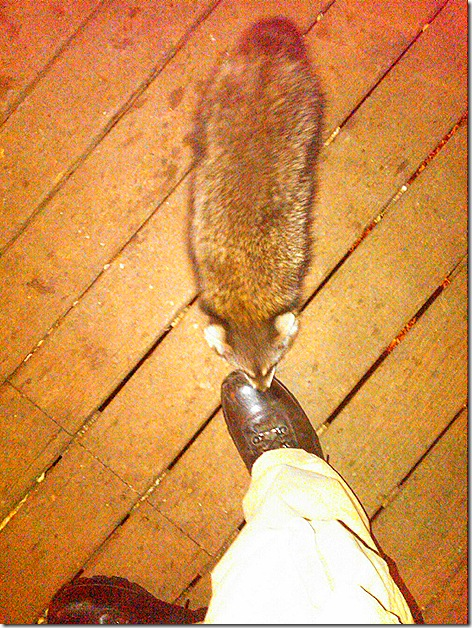 Me and baby raccoon