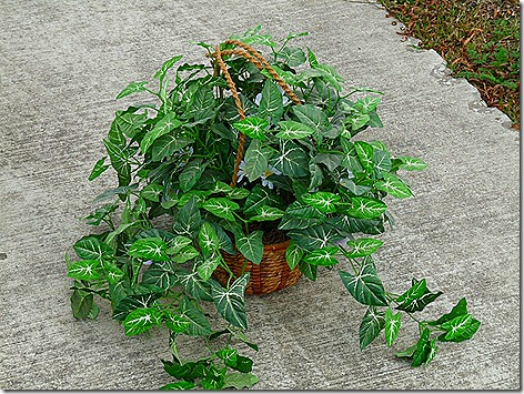 Dumpster Plant