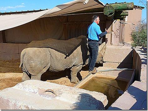 Boom Boom The White Rhino 2