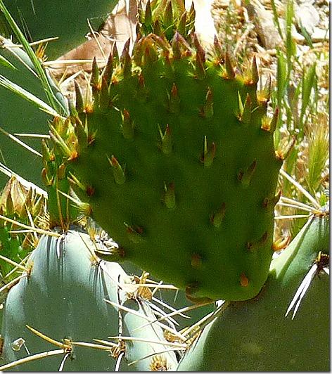 Cactus Sprout 2