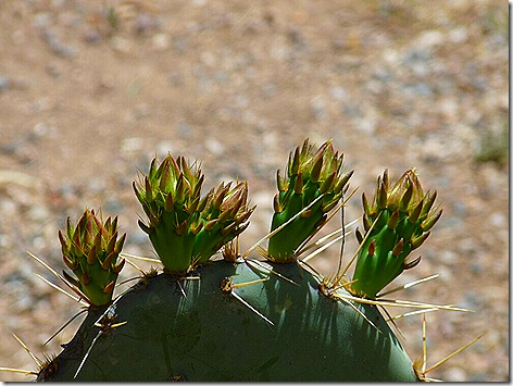Cactus Sprout