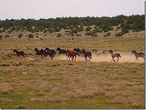 Canyon Horse 2