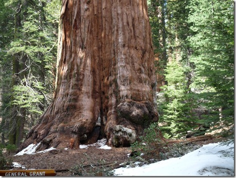 General Grant Tree 2