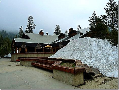 Lodgepole 1