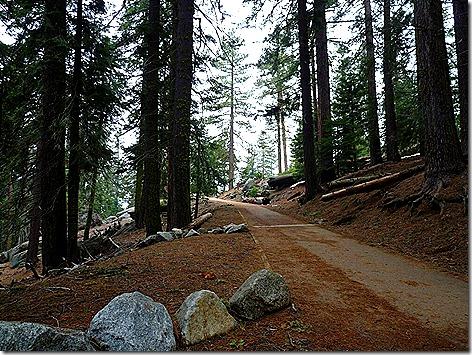 Sherman Tree Trail 2