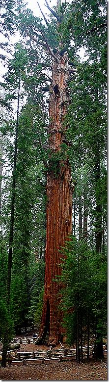 Sherman Tree Trail 3