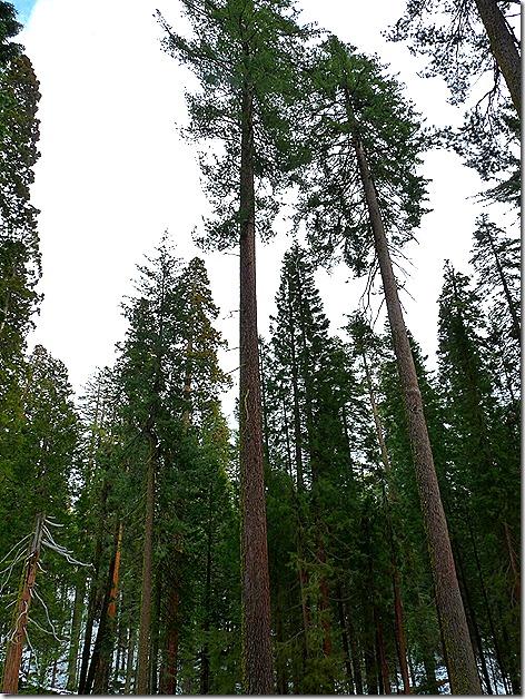 Yosemite Mariposa