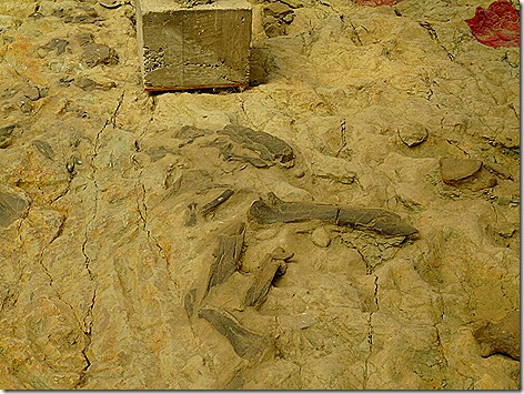 Dino Bones 1