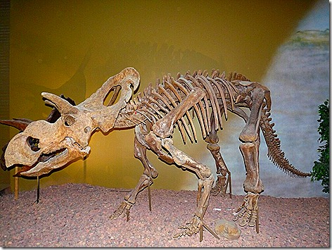 Dinosaur 7