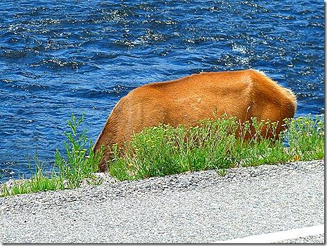 Elk Part 1