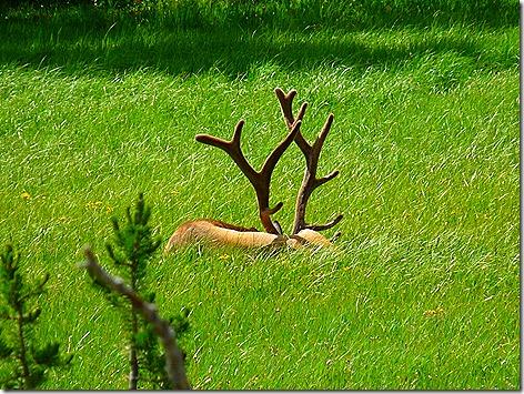 Elk Part 2