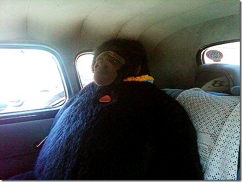 Nite Owl Car Gorilla