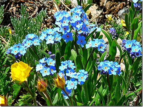 BearTooth Flowers 3