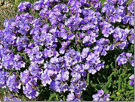 BearTooth Flowers 4