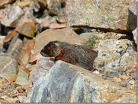 BearTooth Marmot 1