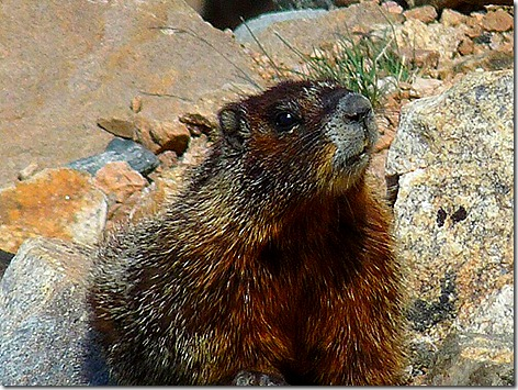 BearTooth Marmot 2