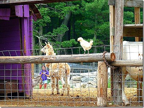 Petting Zoo 5