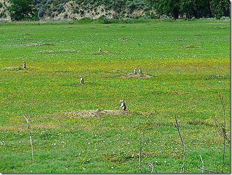 Prairie Dogs 2