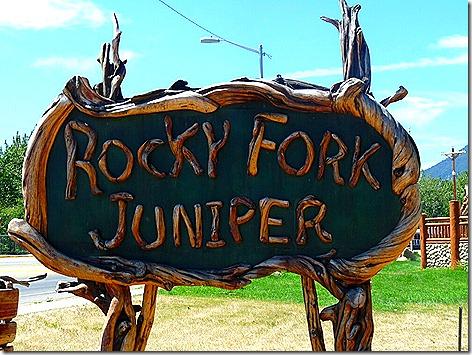 Rocky Fork Juniper 1