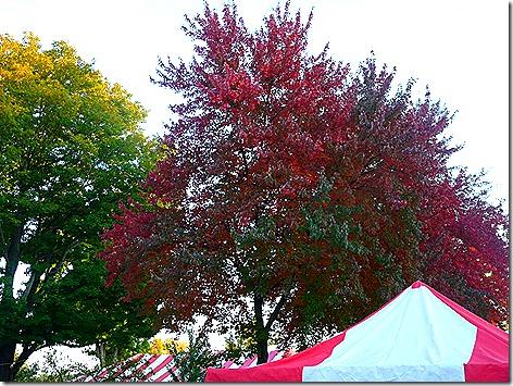 Loudonville Street Fair 4