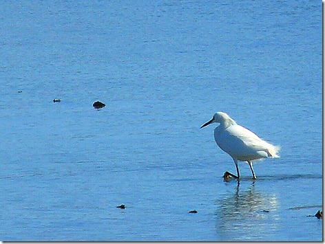GB Birds 1