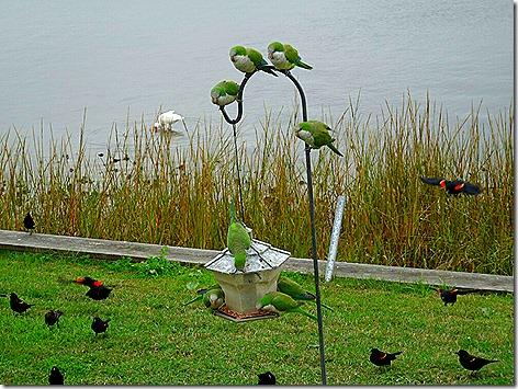 Birdfeeder 1