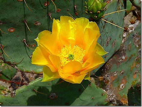 Gate Guard Cactus 1