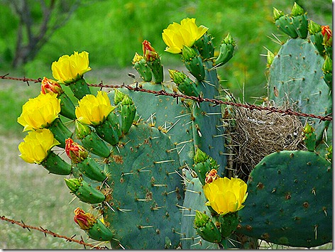 Gate Guard Cactus 2