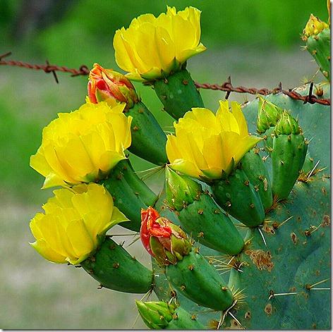 Gate Guard Cactus 3