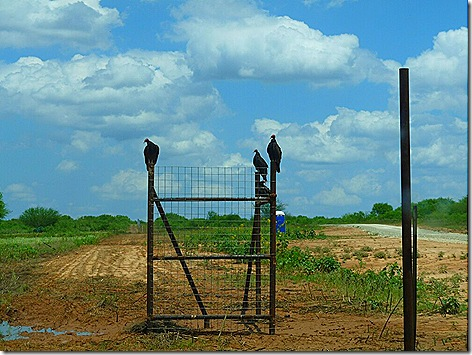 Charlotte Site Vultures 1