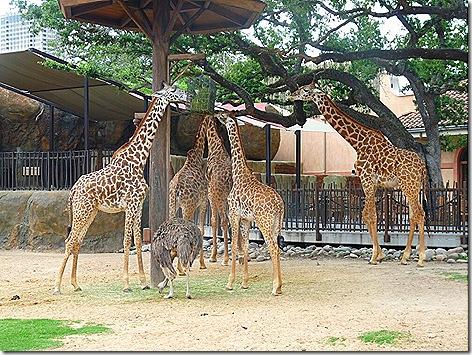 Houston Zoo 2
