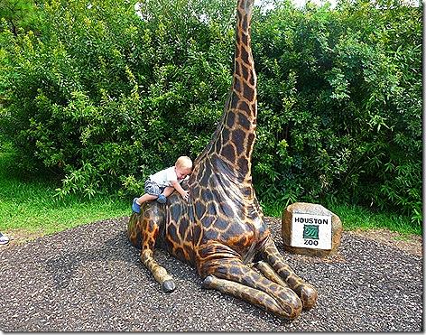 Houston Zoo 3